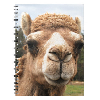 Camel Notebook