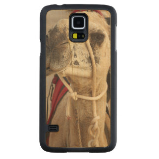 Camel on Cable Beach, Broome Carved® Maple Galaxy S5 Slim Case