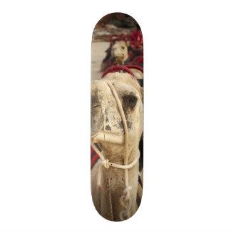 Camel on Cable Beach, Broome Skateboard Deck