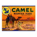Camel Pears Post Card