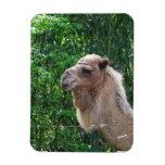 Camel Photo Design  Magnet Magnet