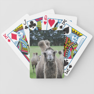 Camel Playing Cards Bicycle Playing Cards