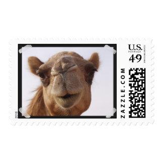 Camel Postage Stamp