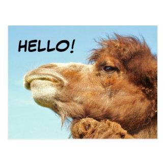 Camel - Postcard
