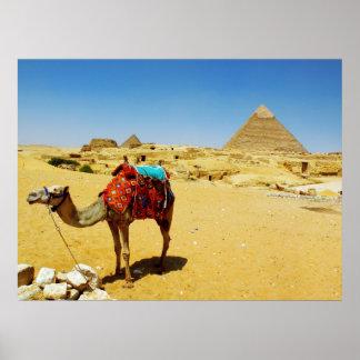 Camel Poster