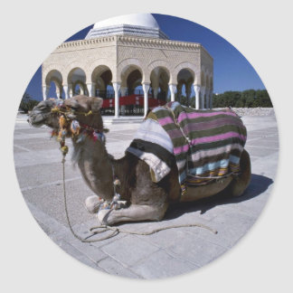 Camel resting in front of dome, Monastir, Tunisia Classic Round Sticker