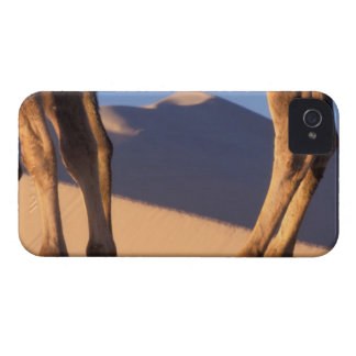 Camel s legs with sand dunes Dunhuang Gansu Blackberry Bold Cover