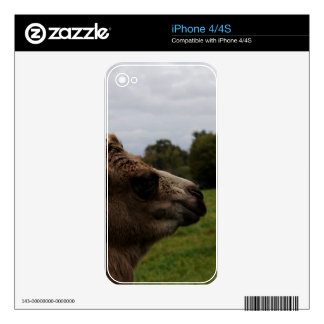 Camel Decal For iPhone 4