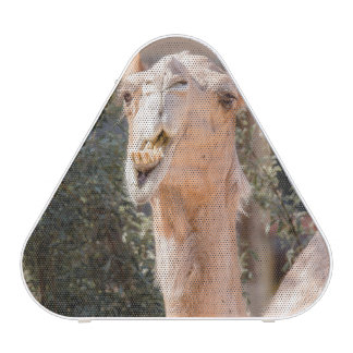 Camel staring while chewing bluetooth speaker