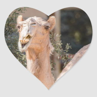 Camel staring while chewing heart sticker