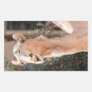 Camel staring while chewing rectangular sticker