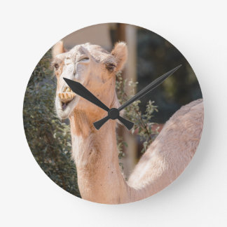 Camel staring while chewing round clock