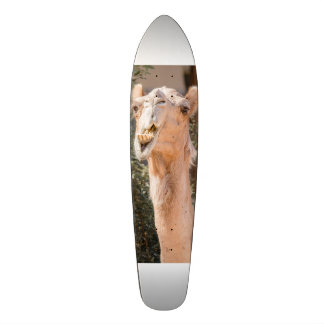 Camel staring while chewing skateboard