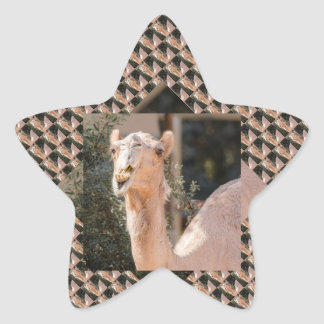 Camel staring while chewing star sticker
