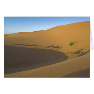 Camel trek greeting card