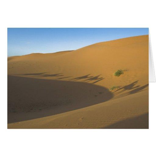 Camel trek greeting cards
