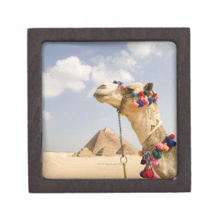 Camel with Pyramids Giza, Egypt Gift Box