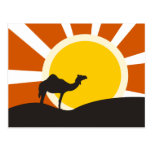 Camel With Sunset Postcard at Zazzle