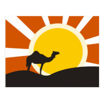 Camel With Sunset Postcard