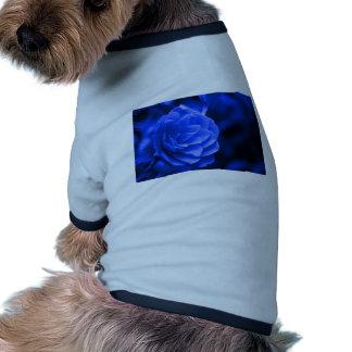 camelia azul prenda mascota