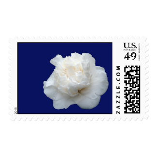 Camelia blanca sello postal