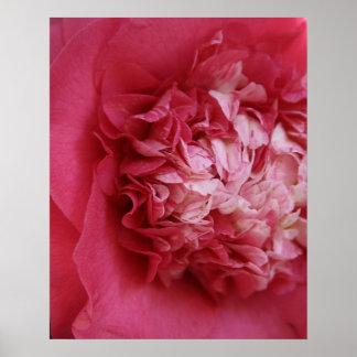 Camelia de las rosas fuertes póster