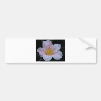Camelia Flower Bumper Sticker