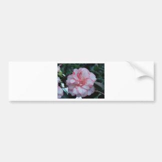 Camelia Flower Bumper Stickers