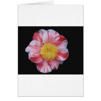 Camelia Flower Cards