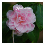Camelia Flowers Posters