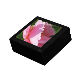 Camelia Gift Boxes