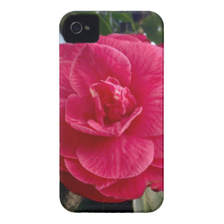 Camelia iPhone 4 Case