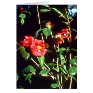 Camelia Japonica A. Audusson (Common Camellia) Pin Greeting Card