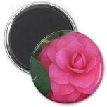 Camelia, Pink, with love! Magnets
