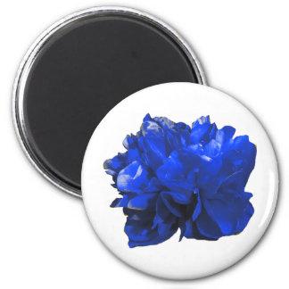 Camelia Pop Blue Magnets