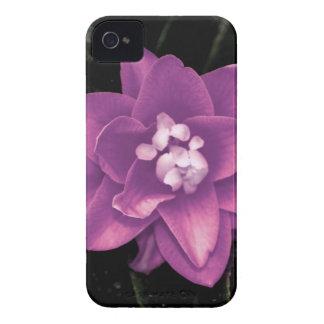 Camelia púrpura iPhone 4 fundas