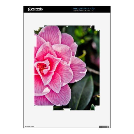 Camelia rosada iPad 2 calcomanía