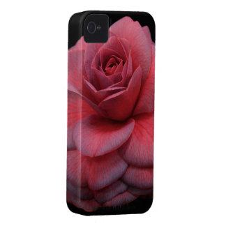 Camelia rosada y púrpura Case-Mate iPhone 4 protectores
