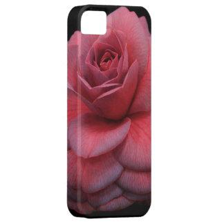 Camelia rosada y púrpura iPhone 5 funda