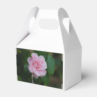 Camelia rosado bonito paquetes de regalo