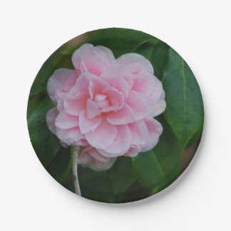 Camelia rosado bonito plato de papel de 7 pulgadas