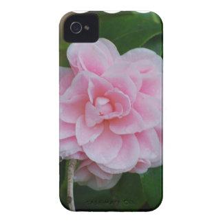 Camelia rosado floreciente funda para iPhone 4