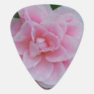 Camelia rosado floreciente plumilla de guitarra