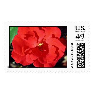 Camelia Stamp