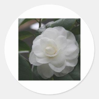 Camelia, white classic round sticker