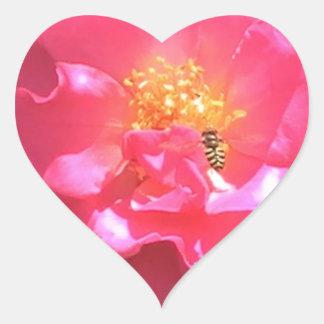 Camelia y abeja rosadas pegatina de corazón