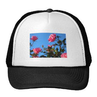 Camelias en la floración gorras