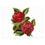 Camellia #1 postcard