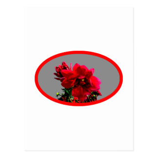 Camellia bg Silver The MUSEUM Zazzle Gifts Postcard