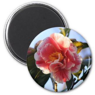 Camellia Blossom magnet